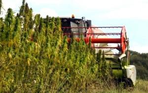 hempindustry