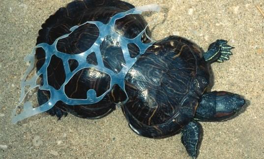 turtleplastic